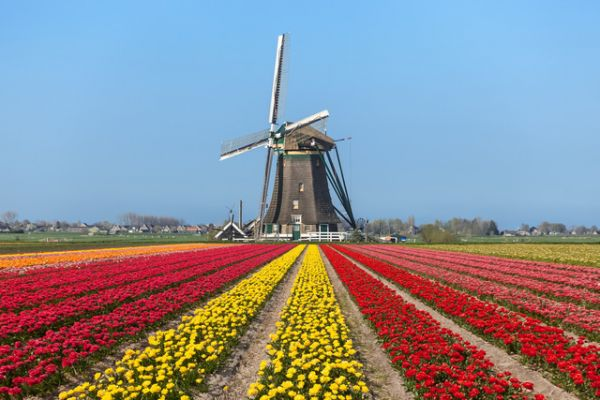 Vé máy bay đi Hà Lan giá rẻ chỉ từ 305 USD