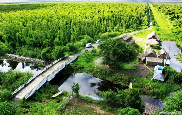 Rừng tràm U Minh Hạ