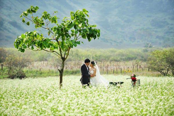 Về Mộc Châu ngắm hoa cải trắng