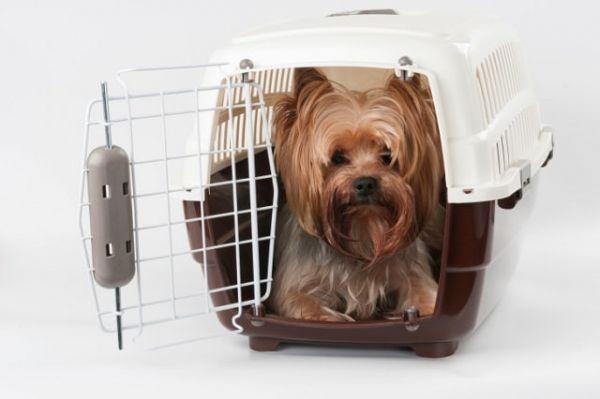 Không được mang thú cưng lên máy bay